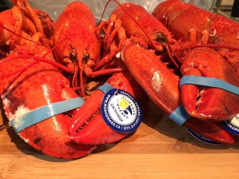 homard de la Gaspésie