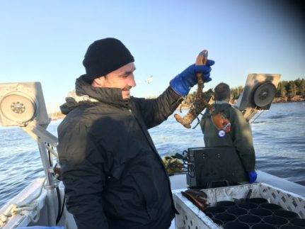 Pêche aux homards